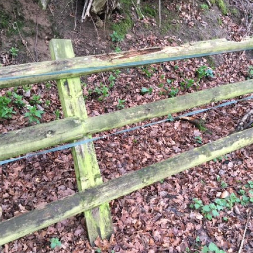 ROTTEN FENCE POSTS